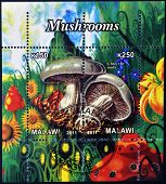 Stamps printed in Malawi dedicated to mushrooms shows clitocybe nuda