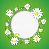 Creative Abstract Background With Chamomile Flower