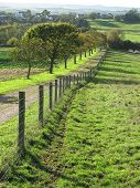 Fence And Tree Lined Track Landscape