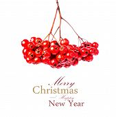 Winter Berry Christmas Branch With Red Holly Berries Hanging Isolated On White Background. Festive R