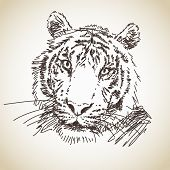 Hand drawn portrait of tiger