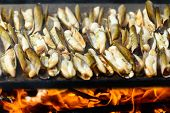 Razor Shells Grill Outside