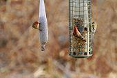 Three Birds Feeding In Early Spring