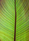 Vertical Green Leaf