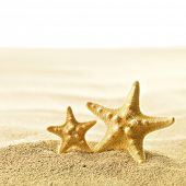 Shell and starfish on sandy beach isolated on white