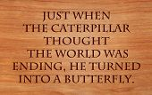 Just when the caterpillar thought the world was ending, he turned into a butterfly - an old proverb on wooden red oak background