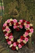 picture of sympathy  - Heart shaped sympathy flowers near a tree