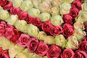 stock photo of centerpiece  - Roses in different shades of pink in a big wedding centerpiece - JPG