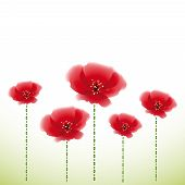 Several poppy flowers on white-green background.