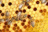 bee worker
