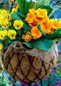 Spring flowers in a basket
