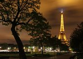 Eiffel Tower at night behind silhouette of a tree