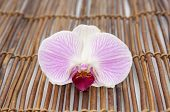 Beautiful violet orchid on bamboo mat