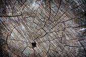 stock photo of deforestation  - Grungy wood trunk cross section - JPG