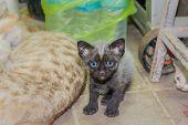 Curious Cute Little Kittens.