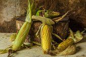 Still Life With Corn