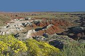 Painted Desert National Park In August - Arizona