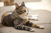 Cute cat enjoying his life