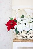 Christmas Flowers With Basket On The Chair.