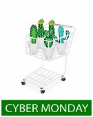 Cactus And Cactus Flowers In Cyber Monday Shopping Cart