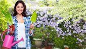 Beautiful young gardening woman in a green garden