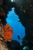 scuba diver exploring the coral reef