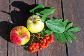 Apples And Mountain Ash