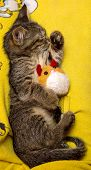Small Cute Kitten Sleeps Hugging Plush Toy