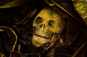 Still Life, Skull With Old Leaves.