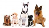 Collage of cute dogs isolated on white
