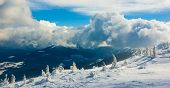 picture of promiscuous  - Winter trees in mountains covered with fresh snow - JPG