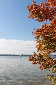 Lake Starnberg And Sail Boats, Autumnal Branches