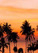 Coconut Horizon Sunset Divine