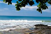 Branches Overhanging Jungle and Sea