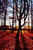 Trees of Yellow Nostalgic Scene