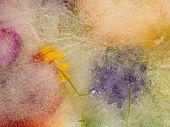 Purple And Orange Flowers