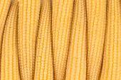 Pickled small corn