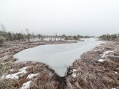 picture of frostbite  - snowy landscape in frosty winter bog in country side - JPG
