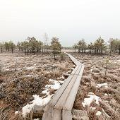 picture of frostbite  - wooden boardwalk in frosty winter bog landscape with frozen nature - JPG