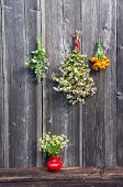 Medical Herbs Bunch On Wall And Red Vase With Chamomile