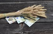 Ripe Wheat Ears Bunch And Euro Money Banknote