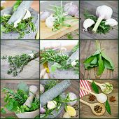 compilation of herbs and spices