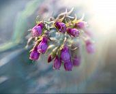 Purple flowers - bluebells