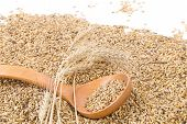 foto of whole-wheat  - Closeup of wheat grains with wood spoon - JPG