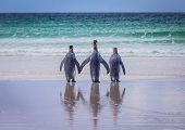 picture of three kings  - Three King Penguins by the shore looking out to sea - JPG