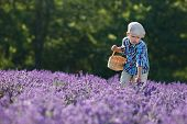 Cute little boy with basket in lavender field