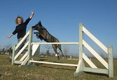 Jumping Dutch Shepherd Dog