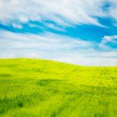 pic of tilt  - Tilt Shift Photo of Green Field at Spring - JPG