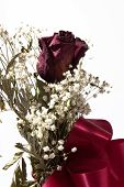 Dried Rose And Baby's Breath