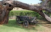 pic of wagon  - An old horse drawn wagon - JPG